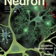 Neuron Sept. 3, 2014 cover