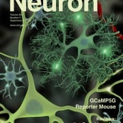 Neuron Sept. 3, 2014 cover